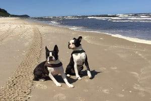 Die Hartz-4-Hundesteuer kann für mehrere Hunde höher ausfallen, da sie oft gestaffelt ist.