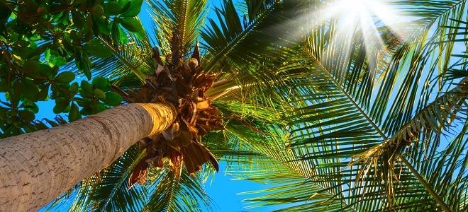 Wie müssen Sie beim Jobcenter einen Urlaub beantragen? Ist ein Formular dazu nötig? Mehr dazu lesen Sie in unserem Ratgeber.
